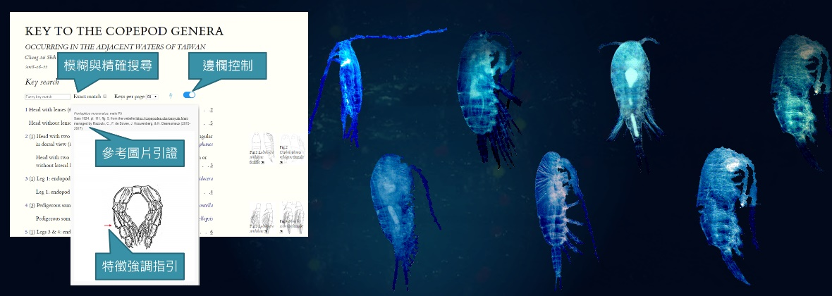 Identify the Copepods